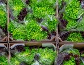 農業における物流の仕組みとは?課題や問題点、解決のポイントを紹介